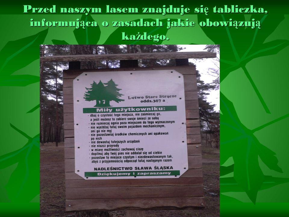 Przed naszym lasem znajduje si ę tabliczka, informuj ą ca o zasadach jakie obowi ą zuj ą ka ż dego.