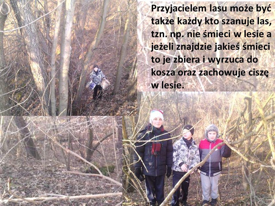 Przyjacielem lasu może być także każdy kto szanuje las, tzn. np. nie śmieci w lesie a jeżeli znajdzie jakieś śmieci to je zbiera i wyrzuca do kosza or