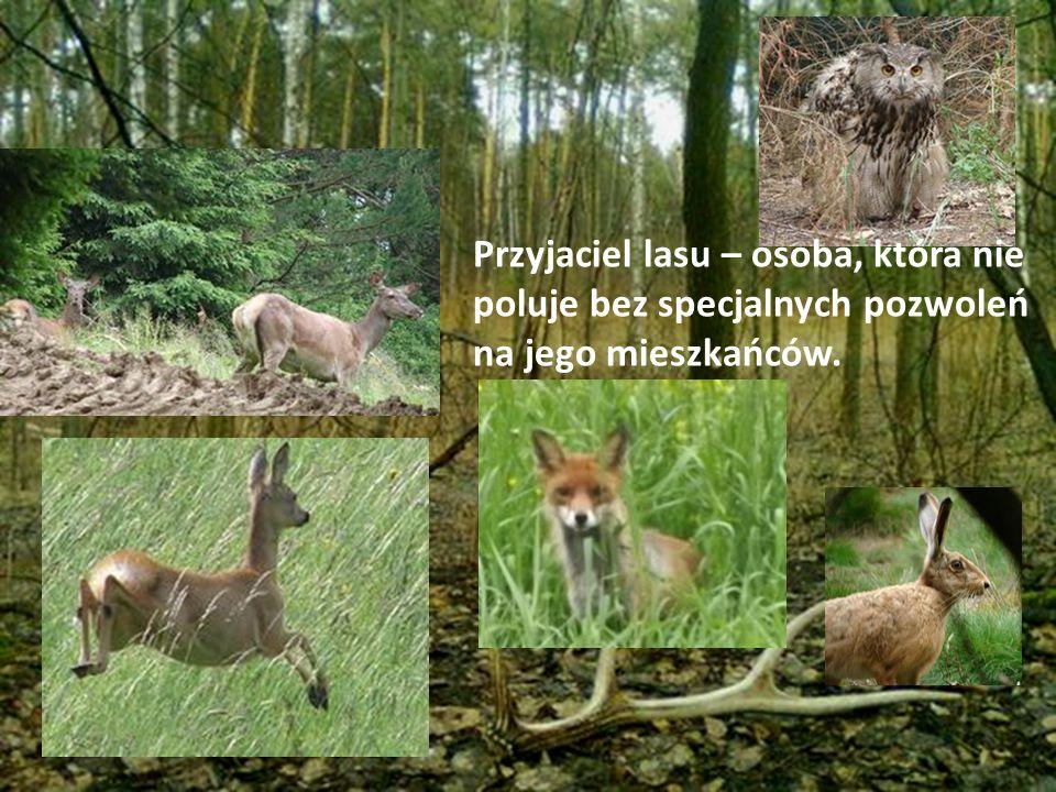 Uważam także, że same zwierzęta mogą być przyjaciółmi lasu.
