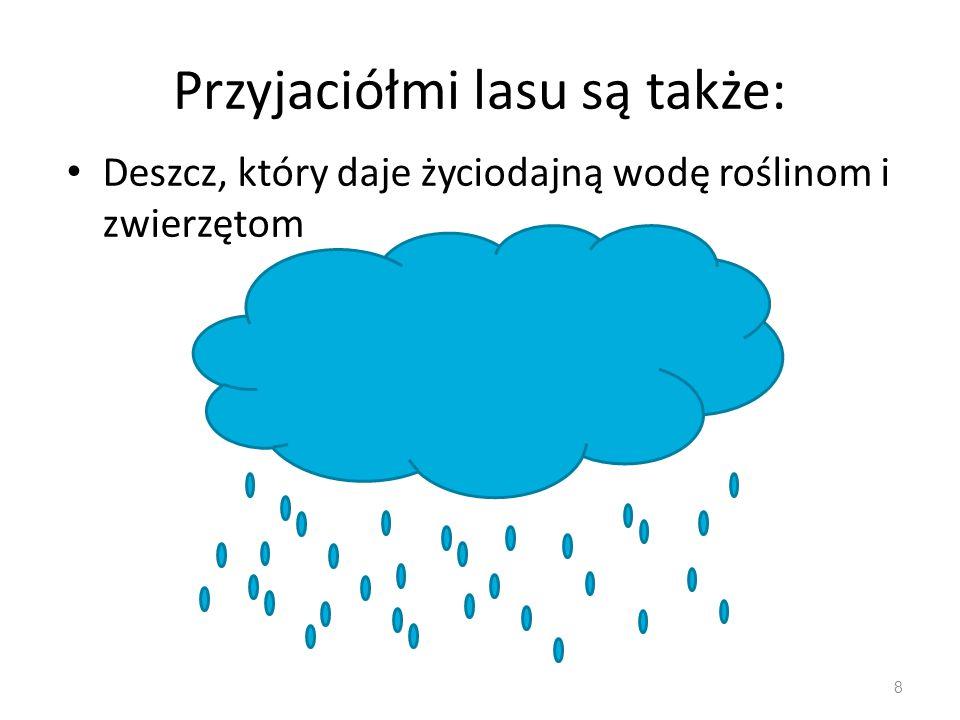 Przyjaciółmi lasu są także: Deszcz, który daje życiodajną wodę roślinom i zwierzętom 8