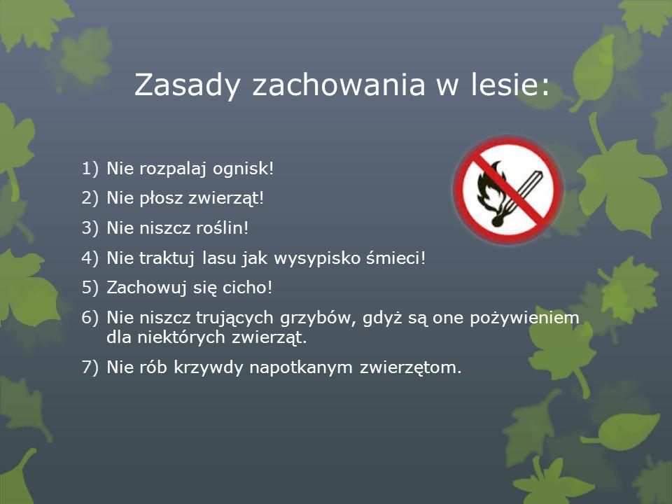 Zwierzęta, które spotka się w polskich lasach: 1)Sarna, 2)Dzik, 3)Lis, 4)Wiewiórka, 5)Jeż, 6)Dzięcioł, 7)Sowa.