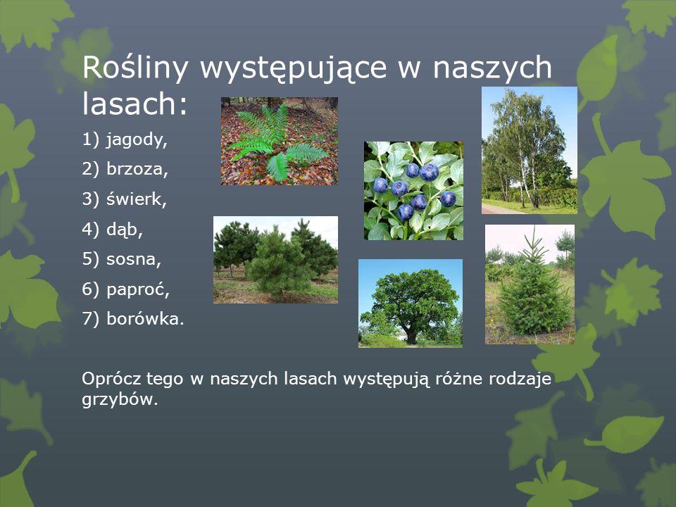 Rośliny występujące w naszych lasach: 1) jagody, 2) brzoza, 3) świerk, 4) dąb, 5) sosna, 6) paproć, 7) borówka. Oprócz tego w naszych lasach występują