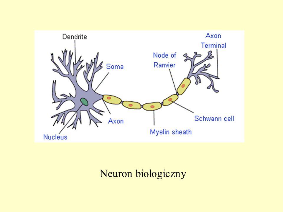 Neuron biologiczny