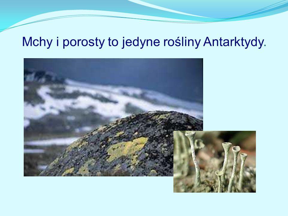 Mchy i porosty to jedyne rośliny Antarktydy.