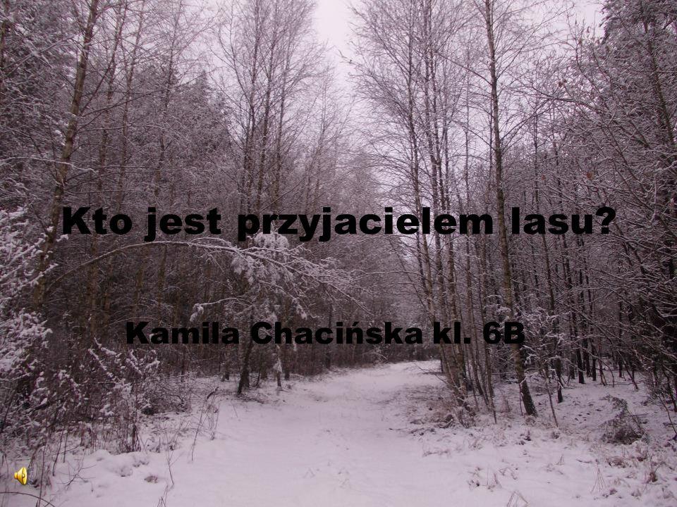 Kto jest przyjacielem lasu? Kamila Chacińska kl. 6B