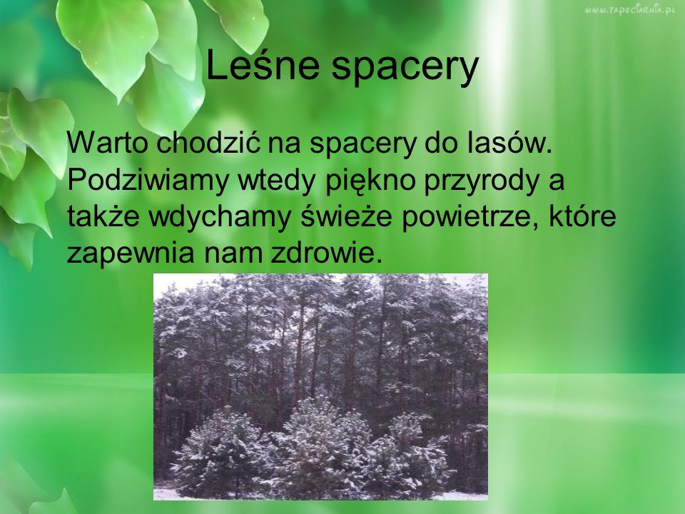Pobliskie leśne karmniki: