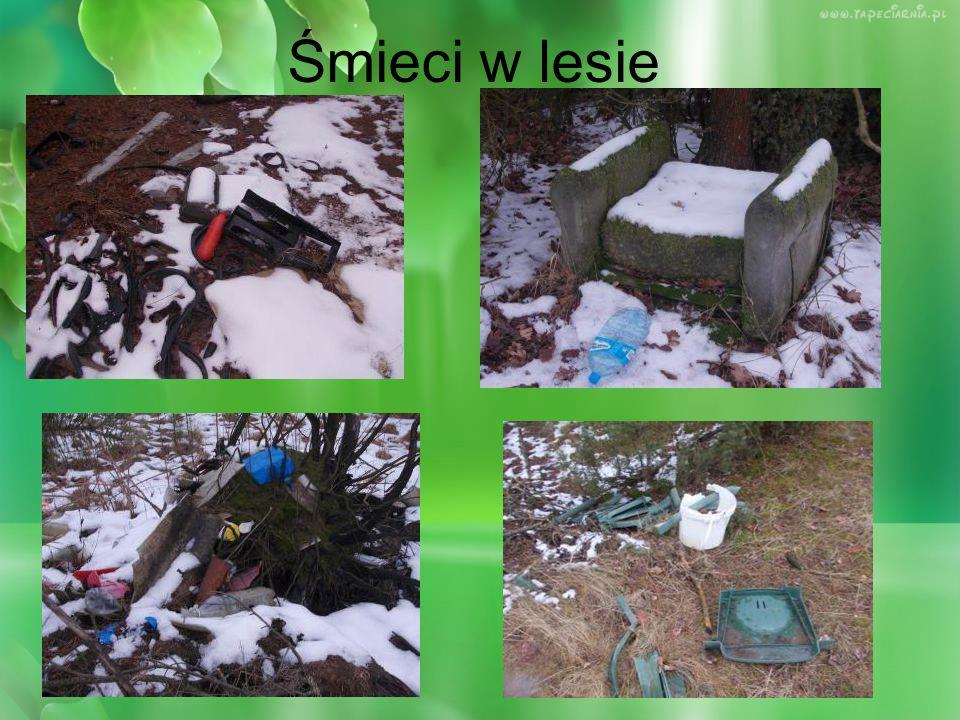 Śmieci w lesie