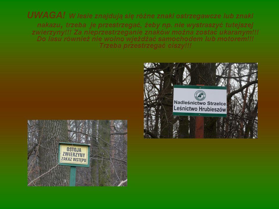 UWAGA! W lesie znajdują się różne znaki ostrzegawcze lub znaki nakazu, trzeba je przestrzegać, żeby np. nie wystraszyć tutejszej zwierzyny!!! Za niepr