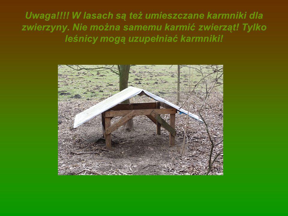 Uwaga!!!! W lasach są też umieszczane karmniki dla zwierzyny. Nie można samemu karmić zwierząt! Tylko leśnicy mogą uzupełniać karmniki!