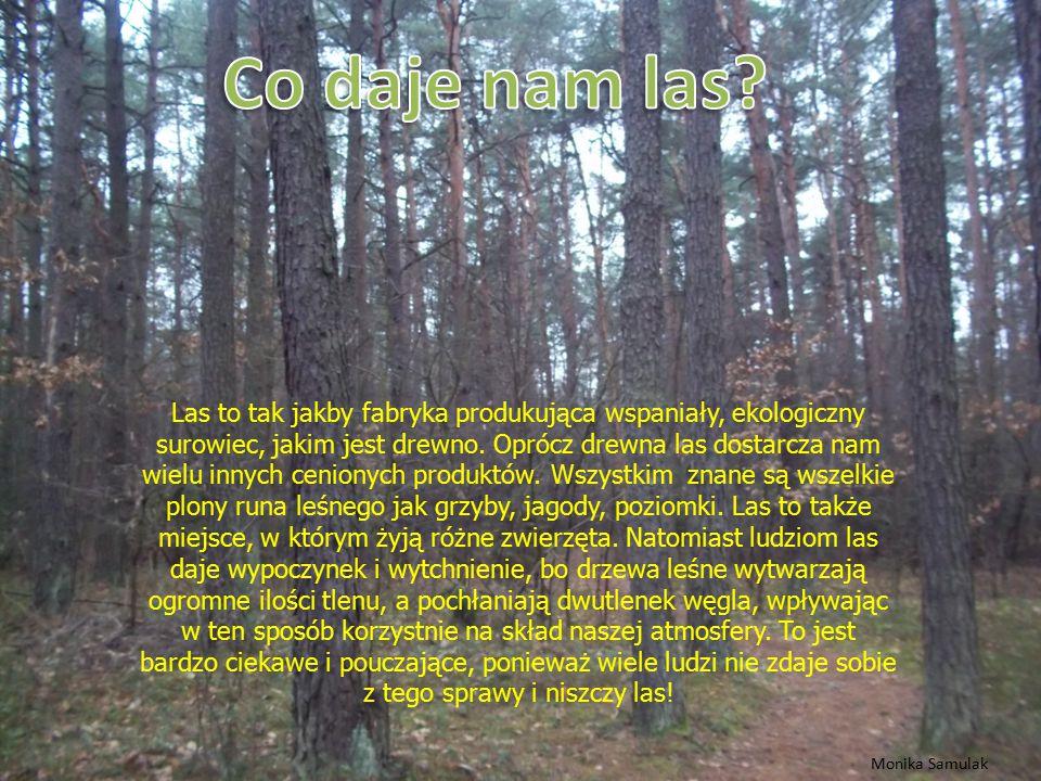 Dzięcioł w lesie w drzewo stuka, Dzik swym ryjkiem jagód szuka, A leśniczy dzielnie kroczy, Jakby miał zamknięte oczy, Przyjaźni w lesie dookoła, Każde zwierzę, Siebie woła.