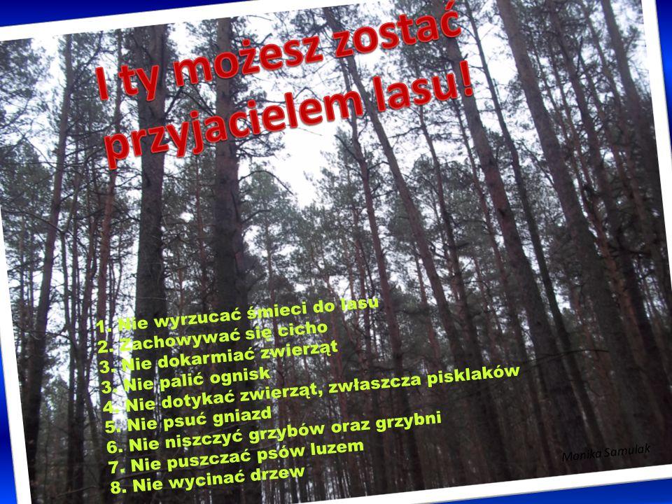 Las to tak jakby fabryka produkująca wspaniały, ekologiczny surowiec, jakim jest drewno.