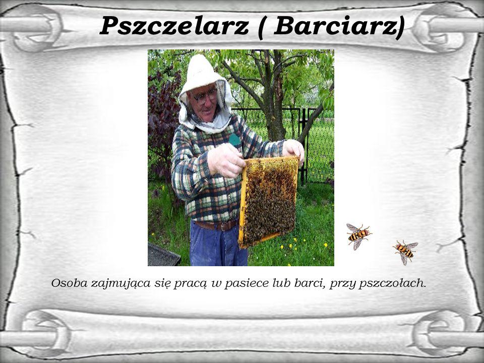Pszczelarz ( Barciarz) Osoba zajmująca się pracą w pasiece lub barci, przy pszczołach.