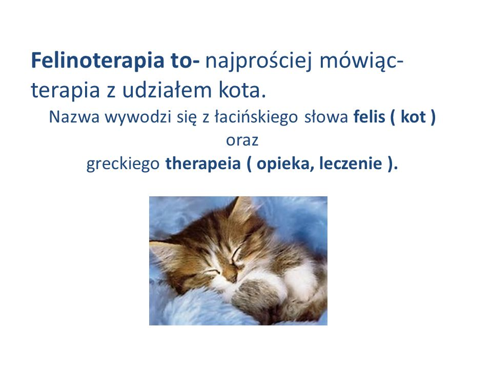Felinoterapia to- najprościej mówiąc- terapia z udziałem kota. Nazwa wywodzi się z łacińskiego słowa felis ( kot ) oraz greckiego therapeia ( opieka,