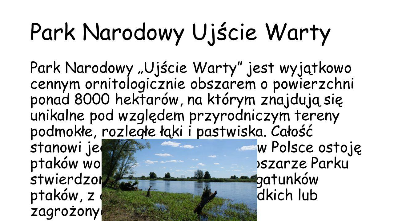 """Park Narodowy Ujście Warty Park Narodowy """"Ujście Warty"""" jest wyjątkowo cennym ornitologicznie obszarem o powierzchni ponad 8000 hektarów, na którym zn"""