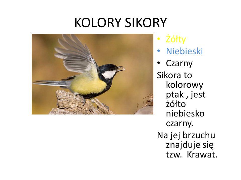 KOLORY SIKORY Żółty Niebieski Czarny Sikora to kolorowy ptak, jest żółto niebiesko czarny. Na jej brzuchu znajduje się tzw. Krawat.