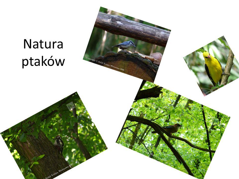 Natura ptaków