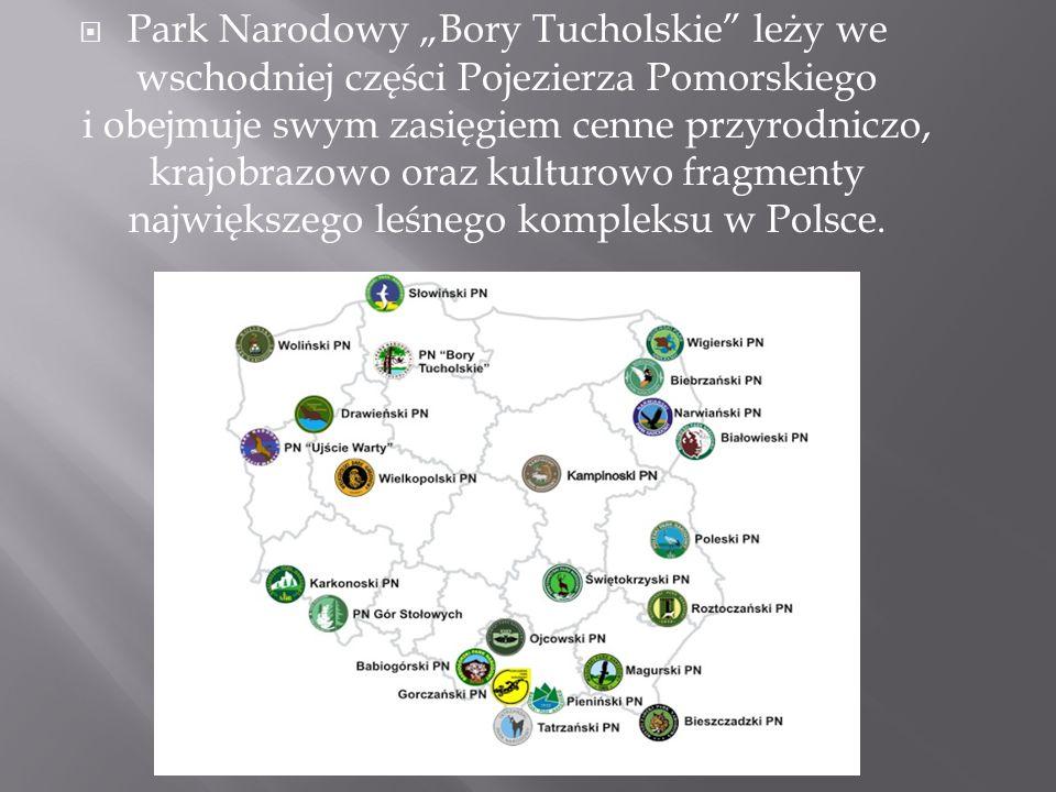 """ Park Narodowy """"Bory Tucholskie"""" leży we wschodniej części Pojezierza Pomorskiego i obejmuje swym zasięgiem cenne przyrodniczo, krajobrazowo oraz kul"""