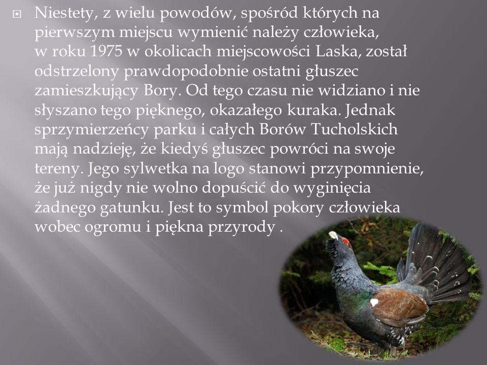 " ""Bory Tucholskie'' to park leśno–jeziorny."