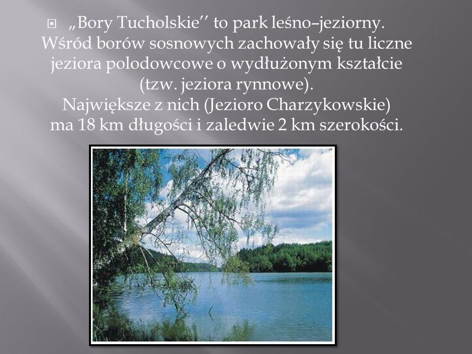 """ """"Bory Tucholskie'' to park leśno–jeziorny. Wśród borów sosnowych zachowały się tu liczne jeziora polodowcowe o wydłużonym kształcie (tzw. jeziora ry"""
