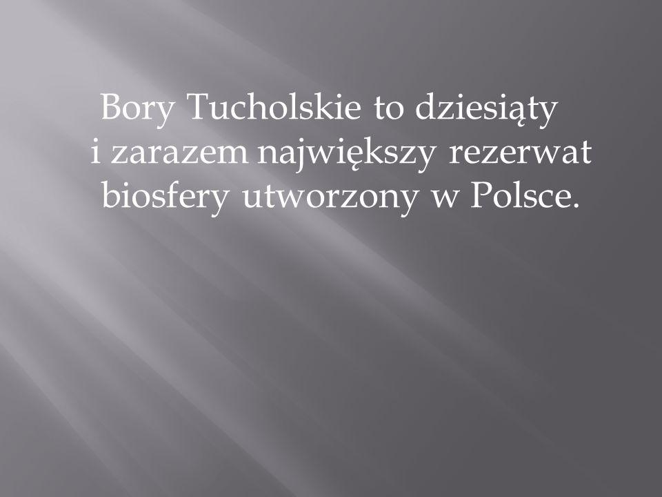 Bory Tucholskie to dziesiąty i zarazem największy rezerwat biosfery utworzony w Polsce.