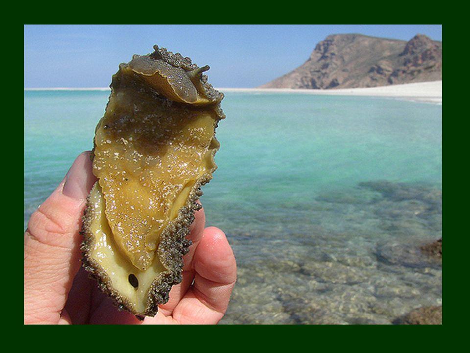 Życie morskie na Sokotrze jest niezykle różnorodne: żyje tam 253 gatunków raf koralowych i 730 gatunków ryb przybrzeżnych, oraz 300 gatunków krabów, h
