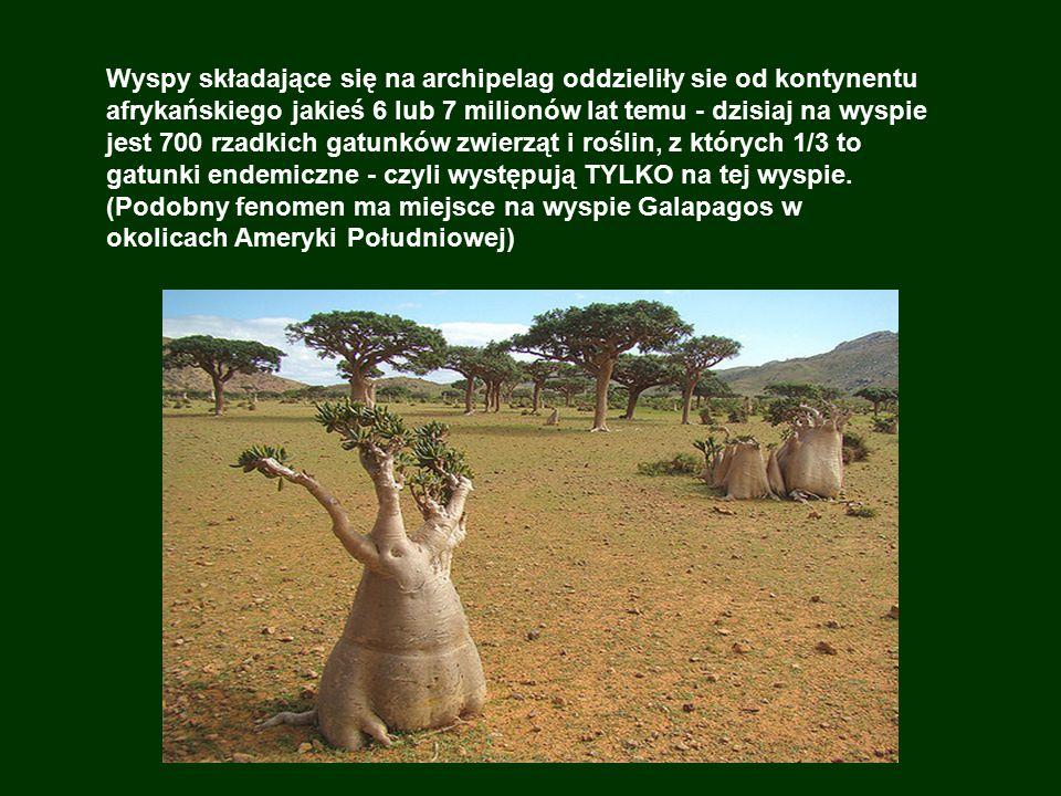 Wyspy składające się na archipelag oddzieliły sie od kontynentu afrykańskiego jakieś 6 lub 7 milionów lat temu - dzisiaj na wyspie jest 700 rzadkich gatunków zwierząt i roślin, z których 1/3 to gatunki endemiczne - czyli występują TYLKO na tej wyspie.