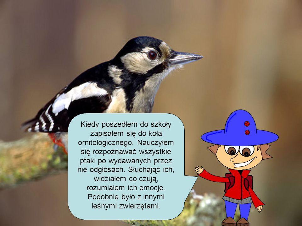 Kiedy poszedłem do szkoły zapisałem się do koła ornitologicznego. Nauczyłem się rozpoznawać wszystkie ptaki po wydawanych przez nie odgłosach. Słuchaj