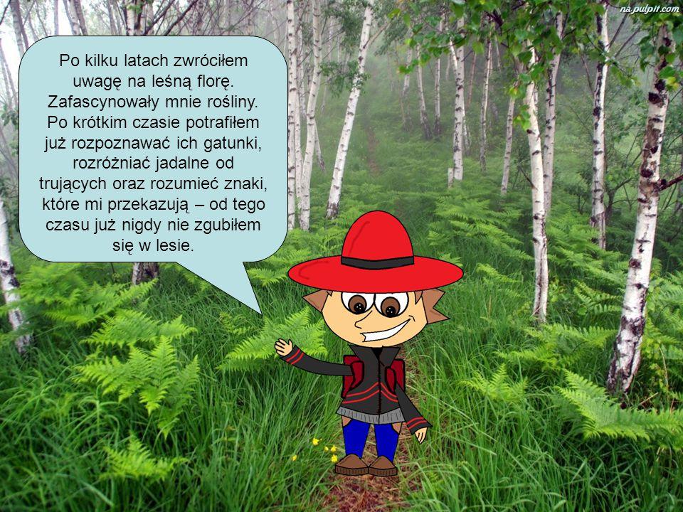 Po kilku latach zwróciłem uwagę na leśną florę. Zafascynowały mnie rośliny. Po krótkim czasie potrafiłem już rozpoznawać ich gatunki, rozróżniać jadal