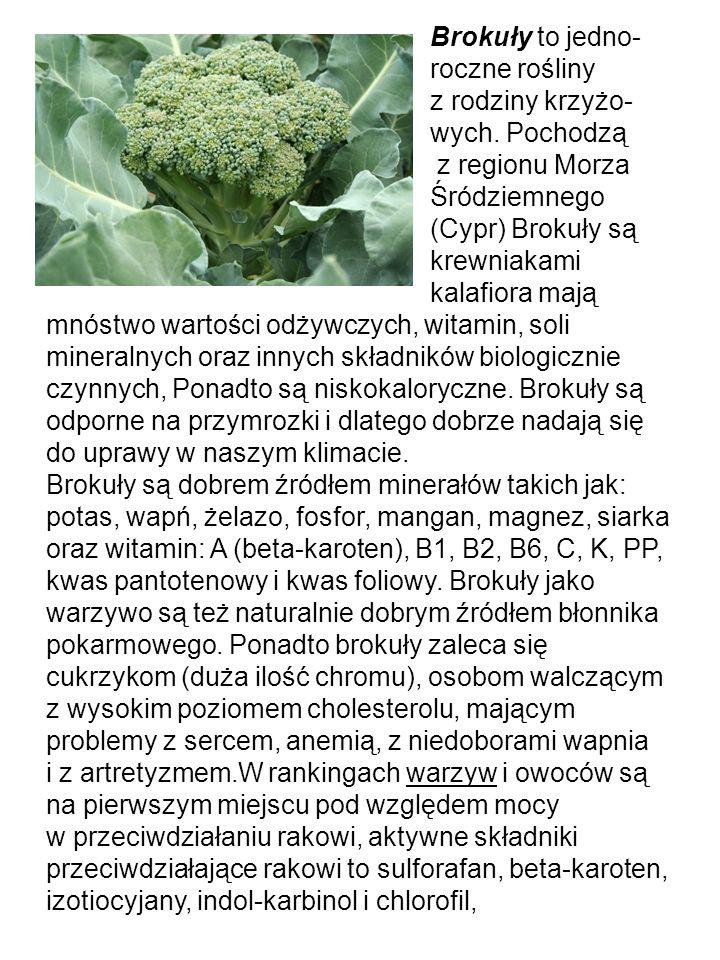 Sałata to roślina jednorocz- na.