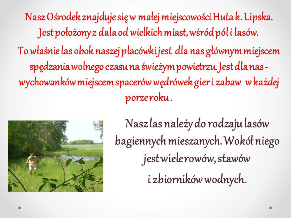 LASY W MOJEJ OKOLICY Opracowanie: Mateusz Czołomiej, kl.