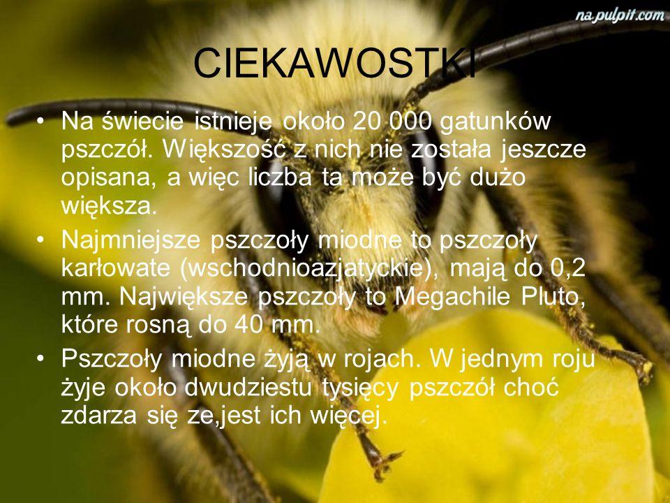 MIÓD Miód – słodki produkt spożywczy, w warunkach naturalnych wytwarzany głównie przez pszczoły właściwe (miód pszczeli) oraz nieliczne inne błonkówki
