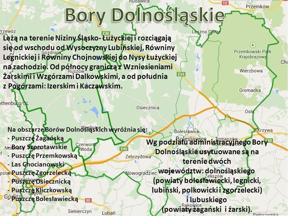 Przemysław Nowakowski Leżą one na terenie Niziny Śląsko- Łużyckiej i rozciągają się od wschodu od Wysoczyzny Lubińskiej, Równiny Legnickiej i Równiny Chojnowskiej do Nysy Łużyckiej na zachodzie; od północy graniczą z Wzniesieniami Żarskimi i Wzgórzami Dalkowskimi, a od południa Pogórzami Izerskim i Kaczawskim.
