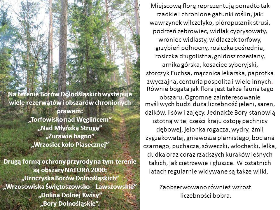 """Na terenie Borów Dolnośląskich występuje wiele rezerwatów i obszarów chronionych prawem: """"Torfowisko nad Węglińcem"""" """"Nad Młyńską Strugą"""" """"Żurawie bagn"""