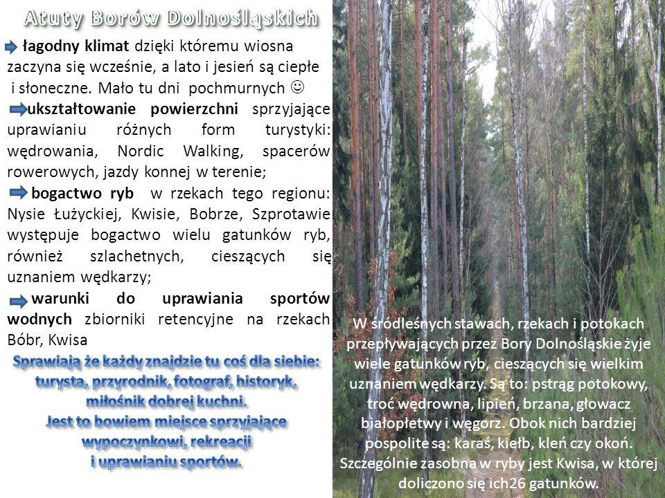 W śródleśnych stawach, rzekach i potokach przepływających przez Bory Dolnośląskie żyje wiele gatunków ryb, cieszących się wielkim uznaniem wędkarzy. S