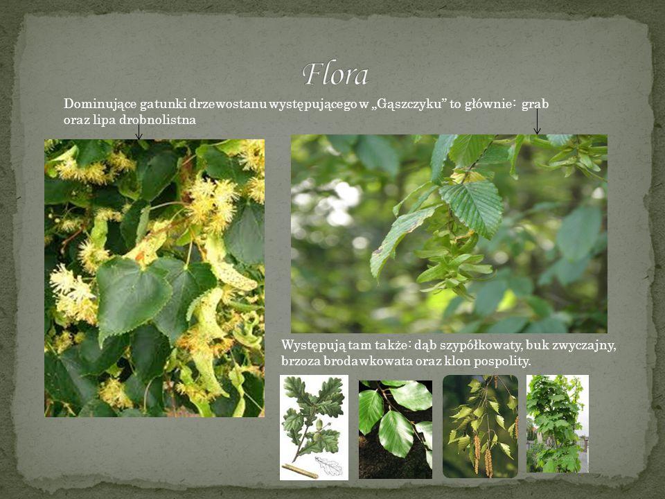 Na północnym, bardzo stromym zboczu Przeprośnej Górki rośnie cienisty las liściasty, zaliczany przez botaników do grądu subkontynetalnego (Tilio corda