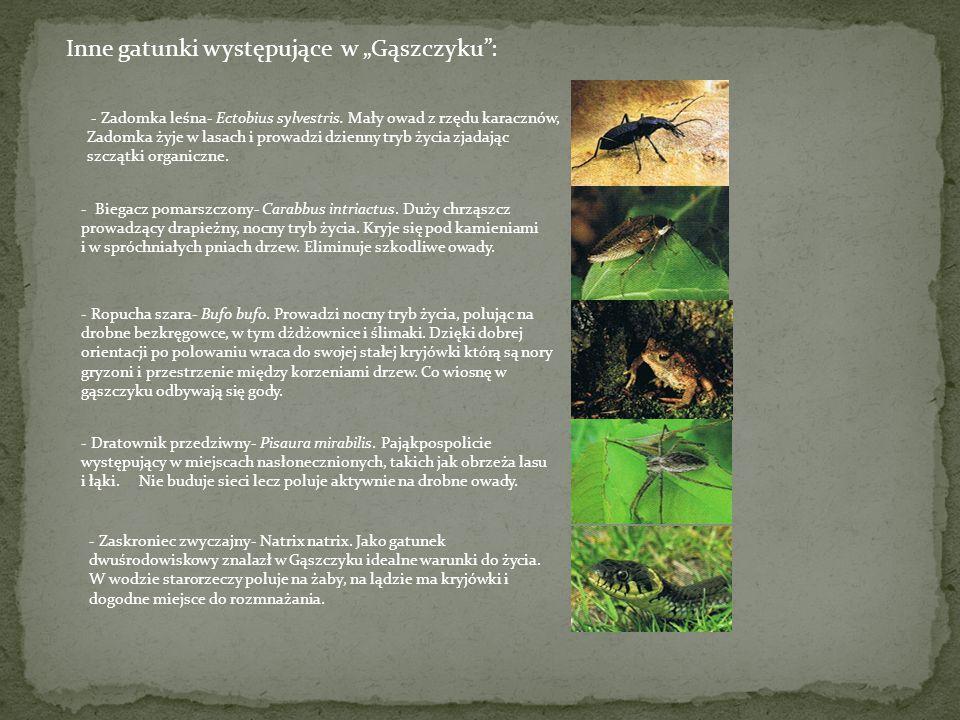 W grupie zwierząt bezkręgowych występujących w Gąszczyku można wyróżnić wielo gatunkowe zgrupowania grądowe w tym specyficzną faunę ściółki i runa, ga
