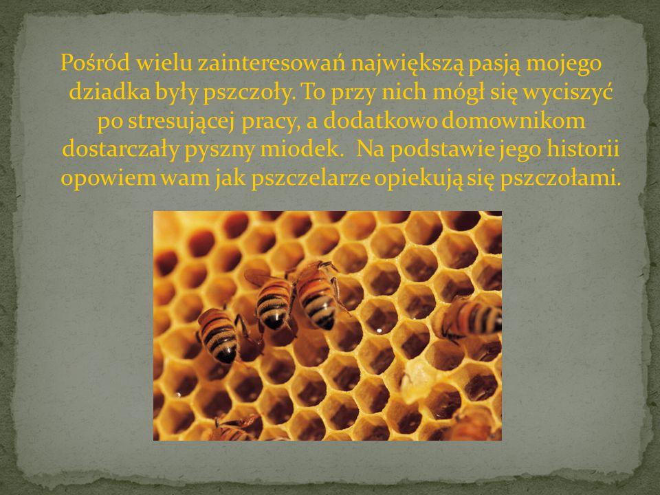 Pośród wielu zainteresowań największą pasją mojego dziadka były pszczoły. To przy nich mógł się wyciszyć po stresującej pracy, a dodatkowo domownikom