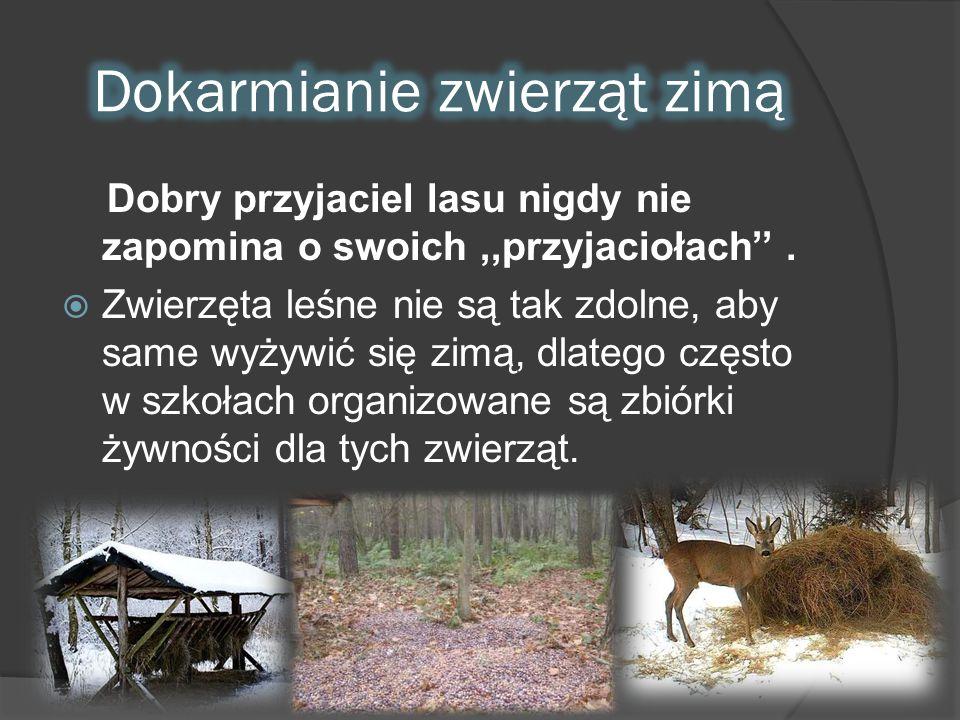 Dobry przyjaciel lasu nigdy nie zapomina o swoich,,przyjaciołach''.  Zwierzęta leśne nie są tak zdolne, aby same wyżywić się zimą, dlatego często w s