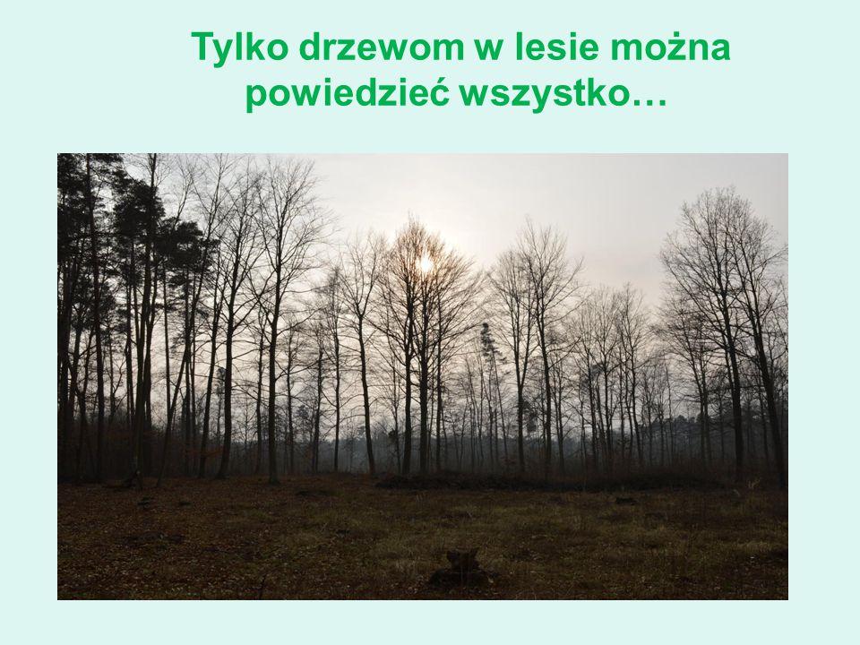 Tylko drzewom w lesie można powiedzieć wszystko…