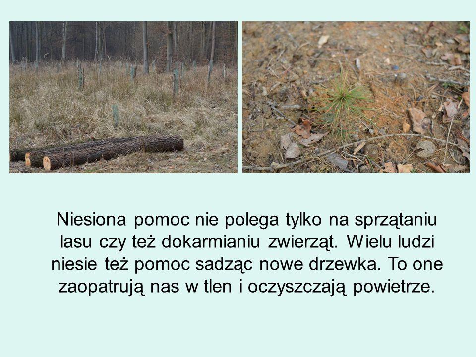 Niesiona pomoc nie polega tylko na sprzątaniu lasu czy też dokarmianiu zwierząt.