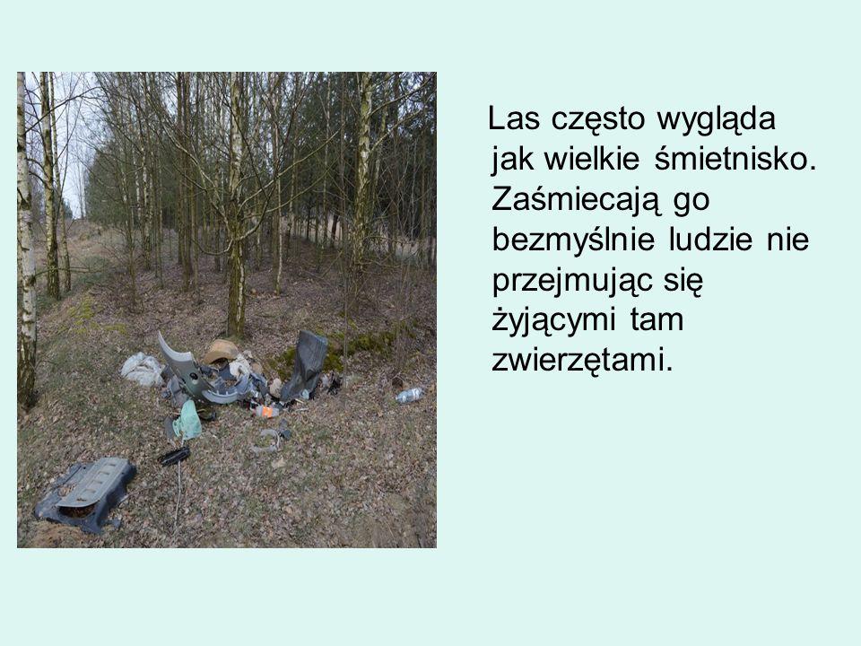 Jednak wiele ludzi m.in.dzieci sprzątają las i dokarmiają żyjące w nim zwierzęta.