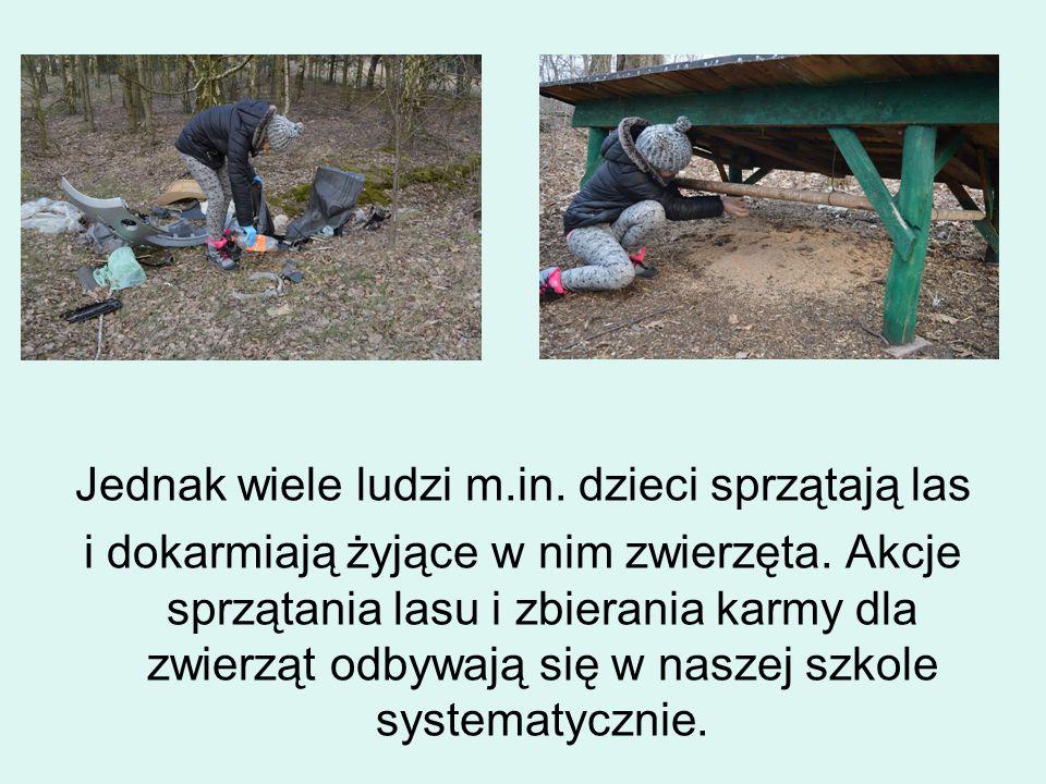 Jednak wiele ludzi m.in. dzieci sprzątają las i dokarmiają żyjące w nim zwierzęta.