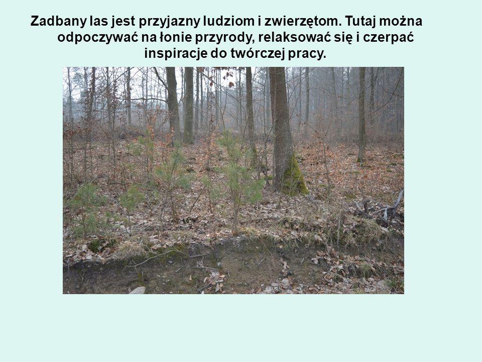 Zadbany las jest przyjazny ludziom i zwierzętom.