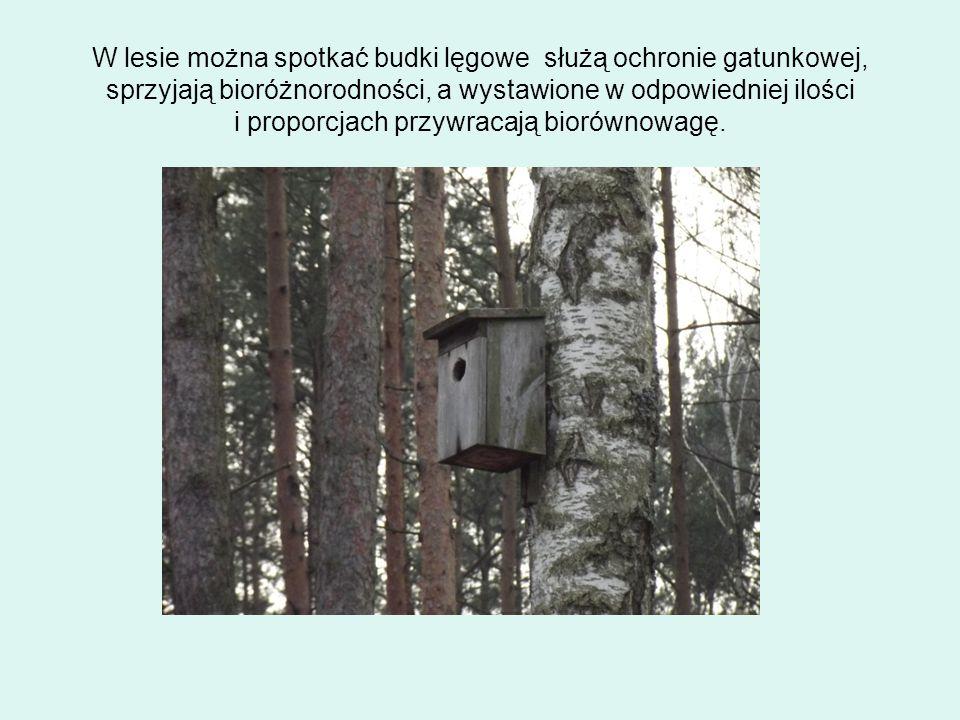 W lesie można spotkać budki lęgowe służą ochronie gatunkowej, sprzyjają bioróżnorodności, a wystawione w odpowiedniej ilości i proporcjach przywracają biorównowagę.