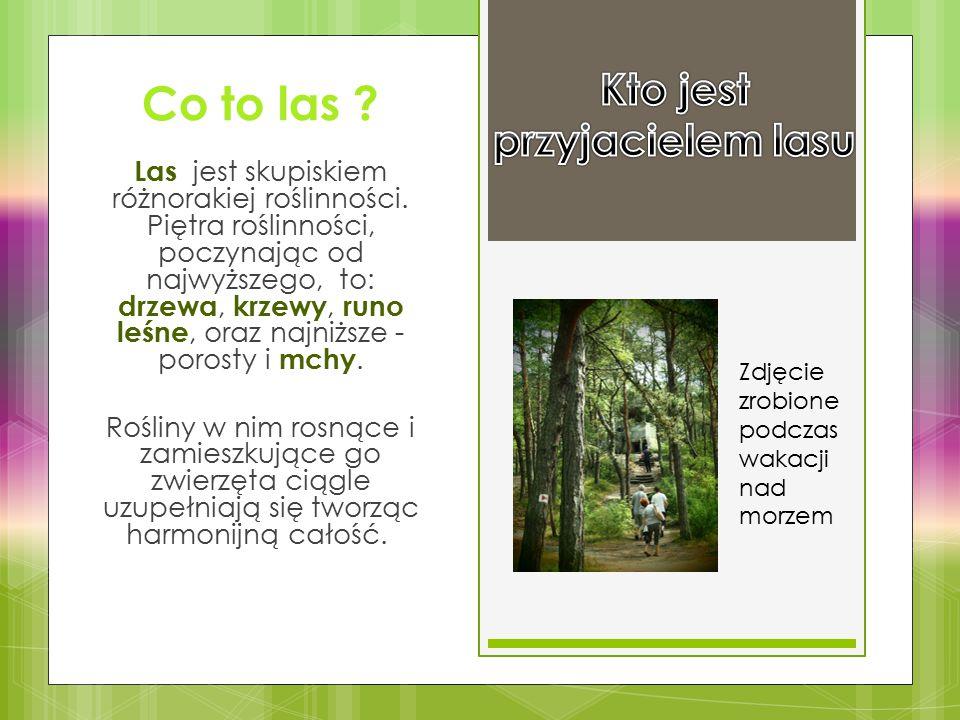 Co to las ? Las jest skupiskiem różnorakiej roślinności. Piętra roślinności, poczynając od najwyższego, to: drzewa, krzewy, runo leśne, oraz najniższe
