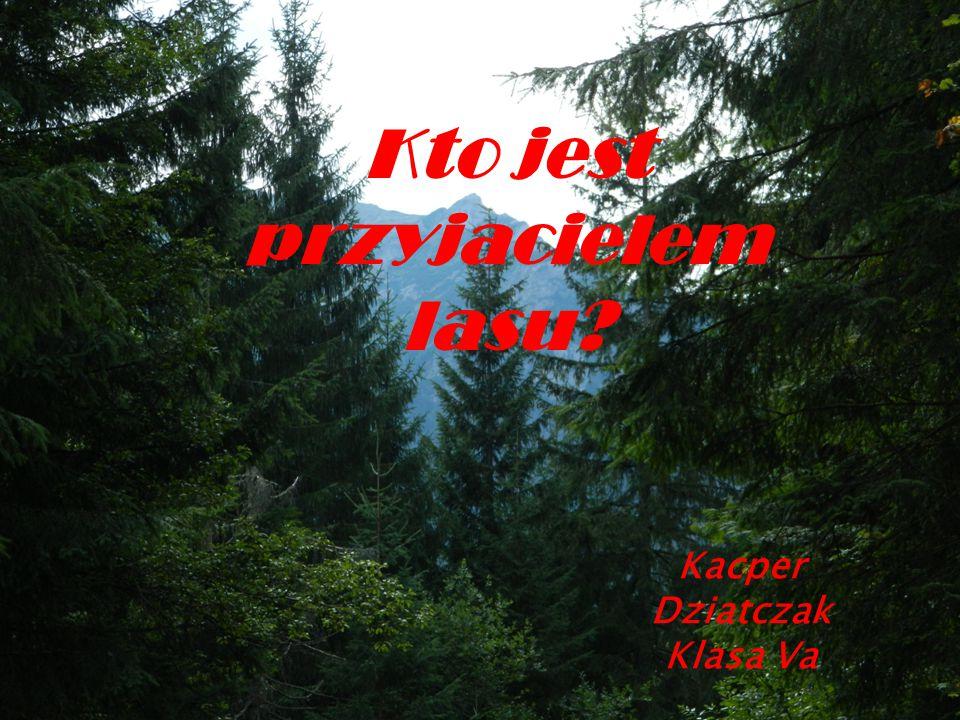 Kto jest przyjacielem lasu? Kacper Dziatczak Klasa Va