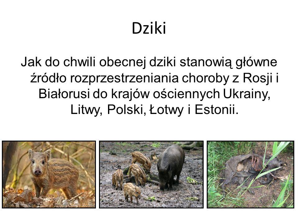 Dziki Jak do chwili obecnej dziki stanowią główne źródło rozprzestrzeniania choroby z Rosji i Białorusi do krajów ościennych Ukrainy, Litwy, Polski, Łotwy i Estonii.