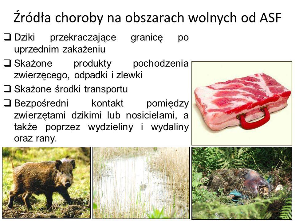 Źródła zakażenia na obszarach  Zakażone lub nosicielskie świnie lub dziki  Skażone odpadki lub zlewki  Gnojówka, owady, szczury, skażone materiały.
