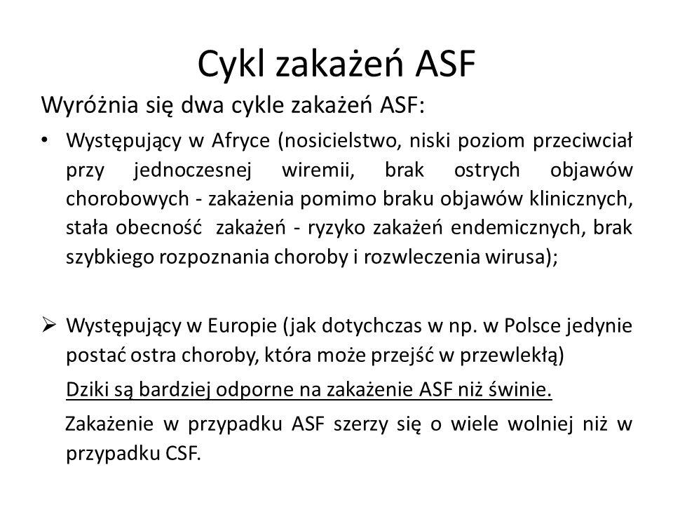 Cykl zakażeń ASF Wyróżnia się dwa cykle zakażeń ASF: Występujący w Afryce (nosicielstwo, niski poziom przeciwciał przy jednoczesnej wiremii, brak ostrych objawów chorobowych - zakażenia pomimo braku objawów klinicznych, stała obecność zakażeń - ryzyko zakażeń endemicznych, brak szybkiego rozpoznania choroby i rozwleczenia wirusa);  Występujący w Europie (jak dotychczas w np.