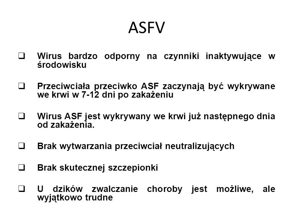 ASFV  Wirus bardzo odporny na czynniki inaktywujące w środowisku  Przeciwciała przeciwko ASF zaczynają być wykrywane we krwi w 7-12 dni po zakażeniu  Wirus ASF jest wykrywany we krwi już następnego dnia od zakażenia.
